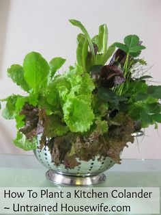 Plant a kitchen colander with lettuce, chives, strawberries ~ makes a great hostess gift!