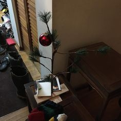 I have to show this because I noticed someone took a pic and got the Charlie Brown tree.