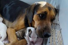 They Rescued This Poor Mama From Euthanasia, But Look Closely At Her Babies...