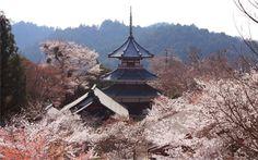 NARA Yoshino   吉野山の桜