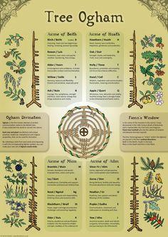 Tree Ogham Infographie Affiche A3 | Etsy Runes Nordiques, Nordic Runes, Celtic Symbols, Mayan Symbols, Egyptian Symbols, Ancient Symbols, Celtic Mythology, Celtic Tree, Letter B