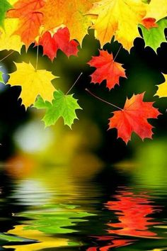 ✯ Leaves.. reflection
