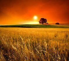 goldenhoursunset