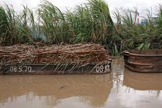 Punt loaded with sugar cane - Skeldon, Guyana