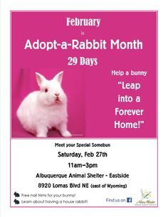 Our February event to celebrate Adopt a Rabbit Month