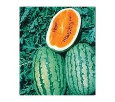 ORANGE FLESHED TENDERSWEET WATERMELON