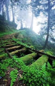 """"""" Overgrown railway tracks in forest ~ Jiancing Historic Trail, Taipingshan National Forest ~ Taiwan. """" """" Overgrown railway tracks in forest ~ Jiancing Historic Trail, Taipingshan National Forest ~ Taiwan. Beautiful World, Beautiful Places, Beautiful Pictures, Amazing Photos, Beautiful Forest, Beautiful Dream, Beautiful Scenery, Stunning View, All Nature"""