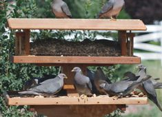 Mourning Dove Feeder on a 4x4 Post