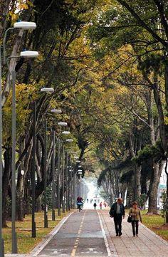 Bogotá, una de las grandes capitales con mayor zona verde del mundo, cuenta con alrededor de 5200 parques y trece humedales alrededor de su área metropolitana.     http://www.bogotaturismo.gov.co/pagina-area/ecoturismo    Foto: Abdú Eljaiek
