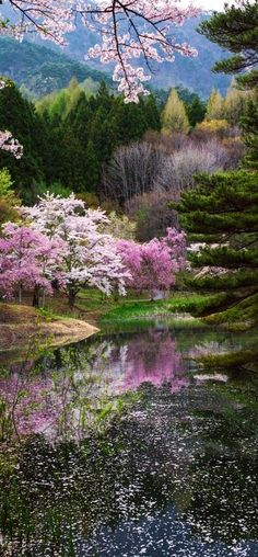 this is SPRING OF JAPAN #photo by Kazuhiro Yashima #flower tree landscape amazing reflection rosa pink