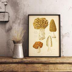 Mushroom Print Fungi Chart Print Affiche Champignon Vintage
