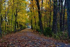 Blackstone Valley bike path - good for walking, running, bike riding