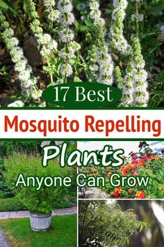 17 Mosquito Repelling Plants that Anyone Can Grow Finding a natural way to save yourself from getting bit by insects? These Best Mosquito Repelling Plants are best to protect you from pesky little flyers! Porch Plants, Backyard Plants, Outdoor Plants, Garden Plants, Outdoor Gardens, Plants That Repel Bugs, Cool Plants, Benefits Of Gardening, Organic Gardening