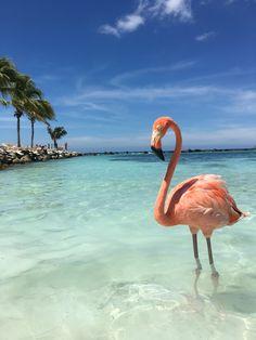 Flamingo Wallpaper, Cloud Wallpaper, Pretty Birds, Pretty In Pink, Flamingo Beach Aruba, Pink Bird, Pink Flamingos, Jamaica, Trips