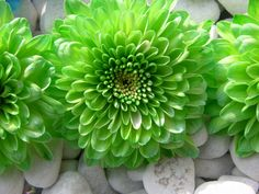 Picture Of Green Flowers