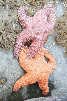 Starfish, beautiful artistically colored creatures of God's living seas, water play place for all. Thank you God.