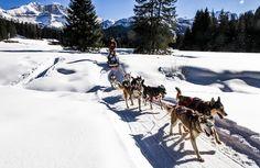 Italia, Trentino, Dolomiti. Val Rendena: una vacanza sulla neve davvero DoloMitica! http://www.familygo.eu/viaggiare_con_i_bambini/trentino/val-rendena/vacanze-a-pinzolo-con-bambini-neve.html