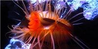 Panic of the Disco Clam on The Scientist