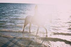 horse in the sun