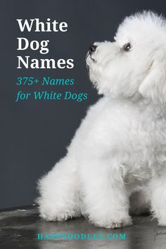 Looking for a name for your perfectly white or partially white dog? To help you decide on the perfect name we have gathered 375+ white dog names for you to choose from. (#Whitedognames, #Whitepuppynames, #dognamesforwhitedogs, #dognames)