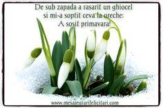 8 Martie, Spring, Plants, Flora, Plant
