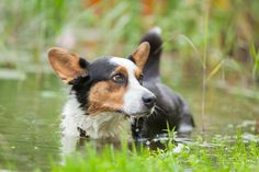 Hond#water