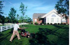 Grass Mowing & Edging
