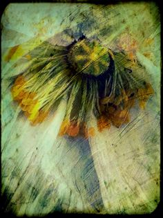 """""""Fading Gracefully"""" - ©Tracy J. Thomas, 2013. All rights reserved."""