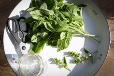 how to grow and maintain basil