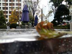 겨울을 부르는 비가 내린 도시 ...  텅빈 벤치를 채우는 것은   소리없는 낙옆...  다가올 추위를 기다려....  #광명전통시장 #맛집 #광명할머니왕족발 은 #광명소셜상점 #미리내가게 #먹스타그램 #프라이스톡 #광명동굴 과 함께 합니다