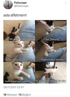 This Pin was discovered by HAL Fowl Language Comics, Funny Share, Funny Videos For Kids, Funny Times, Cute Cat Gif, My Mood, Funny Moments, Cat Love, Kittens Cutest