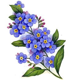 Details about Forget Me Not Flower Select-A-Size Waterslide .- Details about Forget Me Not Flower Select-A-Size Waterslide Ceramic Decals Bx Forget Me Not Flower Select-A-Size Waterslide Ceramic Decals Bx Botanical Flowers, Botanical Prints, Diy Flowers, Vintage Flowers, Purple Flowers, White Flowers, Art Floral, Watercolor Flowers, Watercolor Art