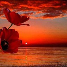 Poppies in the sunset . love the poppies and wonderful sunset also ^_^ ♥ Pretty Pictures, Cool Photos, Amazing Pictures, Amazing Sunsets, Beautiful Sunrise, Belle Photo, Beautiful World, Beautiful Places, Simply Beautiful