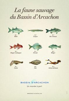 Bassin d'Arcachon, la campagne de com. touristique 2008