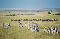 Masai Mara |Maasai Mara National Reserve