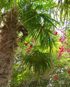 Podría ser un lugar tropical pero es #Torrelodones #madrid #natura #nature #photography #iphone #palmeras