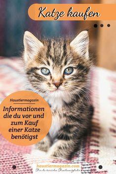 Du möchtest eine Katze kaufen? Dann geht die Sache bitter clever an!  #katze #katzekaufen #kater #stubentiger #haustiere Movie Posters, Adoption, Movies, Animals Dog, Wild Animals, Rabbits, Films, Film, Movie