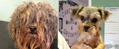 Shelter Dog Makeovers Prove Every Stray Is Handsome Underneath