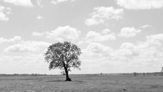 Der kleine Baum....