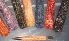 Corn Cob Pen Blanks