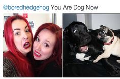 People Are Loving This Twitter Account That Matches You To Your Dog Self