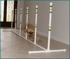 6 Weave Poles w/base for Small Dog - Agility Equipment - http://www.thepuppy.org/6-weave-poles-wbase-for-small-dog-agility-equipment/