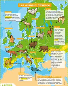 Fiche exposés : Les animaux d'Europe                                                                                                                                                                                 Plus French Teacher, French Class, French Lessons, Learn Biology, Science Biology, Primary Science, Science For Kids, French Teaching Resources, Fun Facts About Animals