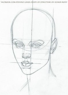 https://www.facebook.com/Stefano-Lanza-Study-of-structure-of-human-body-1479159998770051/?ref=bookmarks  #anatomy #head #drawing #draw #pencil
