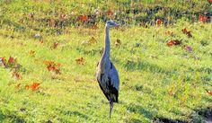 R. Mac Wheeler: Sunday Safari    on the USF campus