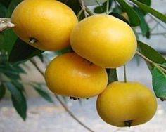 Benefícios da fruta uvaia... A uvalha ou uvaia tem alto teor de vitamina C, possui cerca de quatro vezes mais do que a laranja. Tem a polpa muito delicada, com a casca bem fina, de um amarelo-ouro ligeiramente aveludado. O aroma é suave e muito agradável.