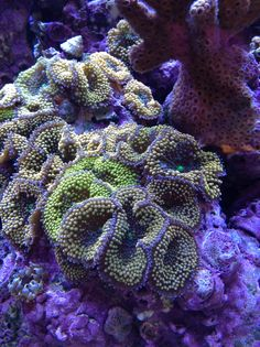 Ocean coral!!!