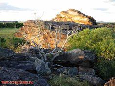 Imagen de http://www.ecosystema.ru/08nature/world/46au-d/29.jpg.