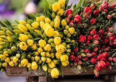 'Tulpen gestapelt' von Fotostudio  S. Grey bei artflakes.com als Poster oder Kunstdruck $8.10