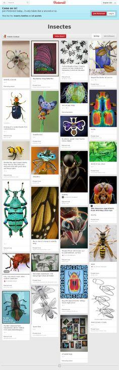 Materials didàctics sobre insectes. Col·lecció de Valerie Cadieux.